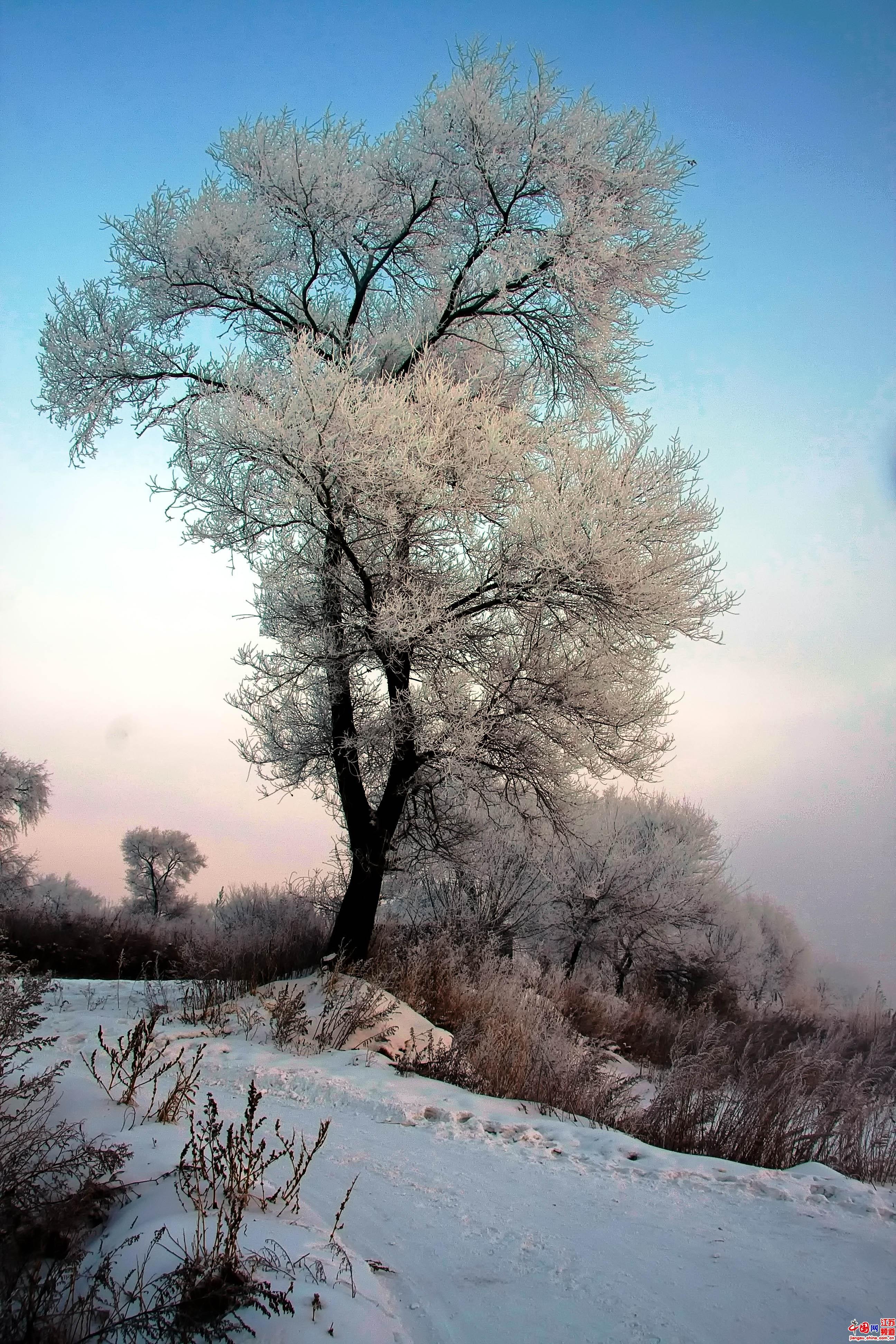 雾松岛因雾凇多且美丽而得名。这里的地势较吉林市区低,又有江水环抱。摄影 郑鹏
