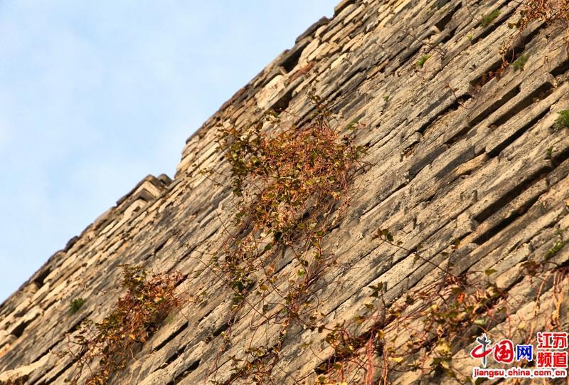 """城墙记载与背负着历史但是却挡不住这""""劲草""""在它的生命中留下痕迹"""