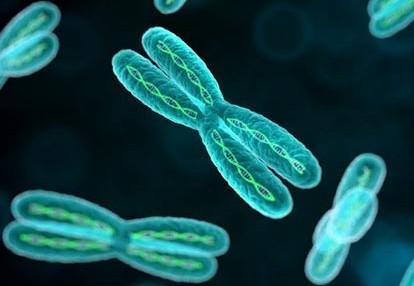 瑞典研究表明:缺失Y染色体的男性可能为癌症高