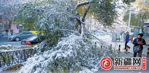 暴雪侵袭乌鲁木齐市 各方妥善应对