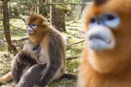 中科院专家质疑野生动物保护法草案:像负面清单