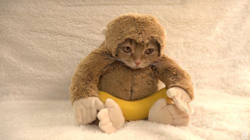 小家伙还吃上了猴子最爱的香蕉