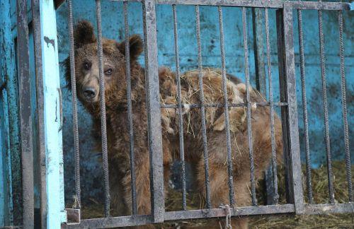 世界上最悲伤的动物园中