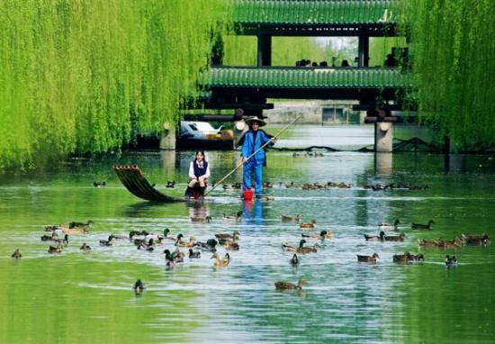 奉化大堰的春天五彩斑斓很美   宁海岔路桃园游客放风筝享受春日   宁图片