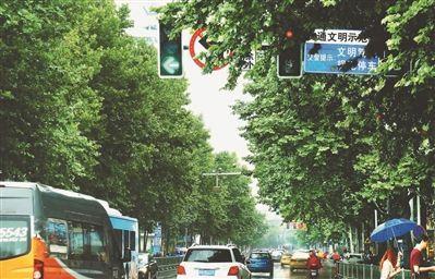 南京交通要道信号灯被法桐枝叶遮住部分