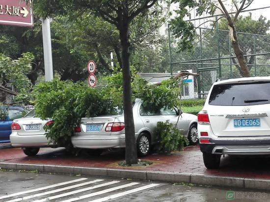 最强台风 海马 汕尾登陆 广东被吹成这样