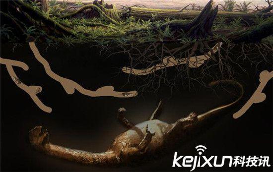 我国首次发现侏罗纪动物巢穴