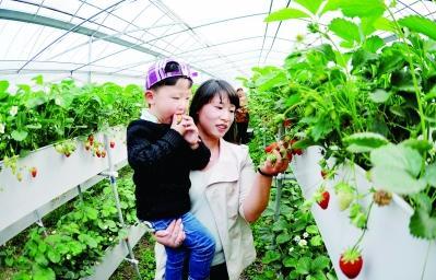 """金湖""""品牌兴农""""实现农业快速转型"""