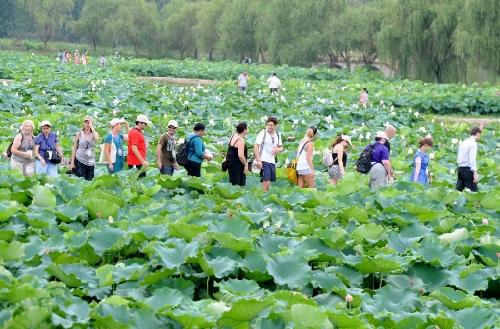 江苏金湖县荷花荡旅游公路全面实施景观绿化工程
