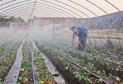 南通海门7000亩大棚种草莓