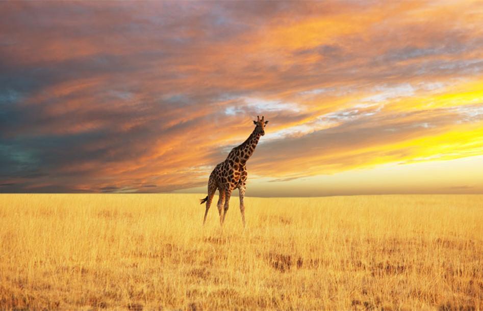 想去非洲旅游办签证其实并不难