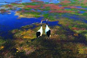 赏斑斓滩涂鹤之乐园