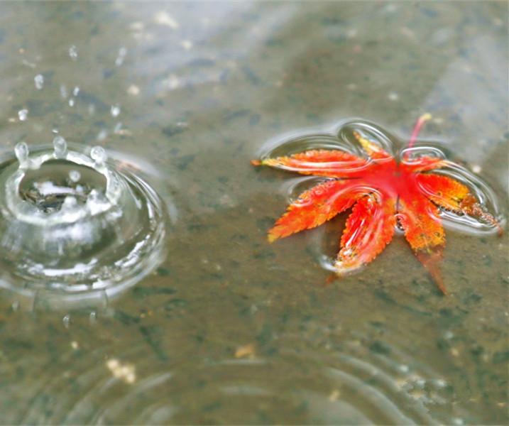 秋分秋雨秋叶黄