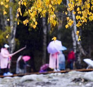 禾木雨中仙境