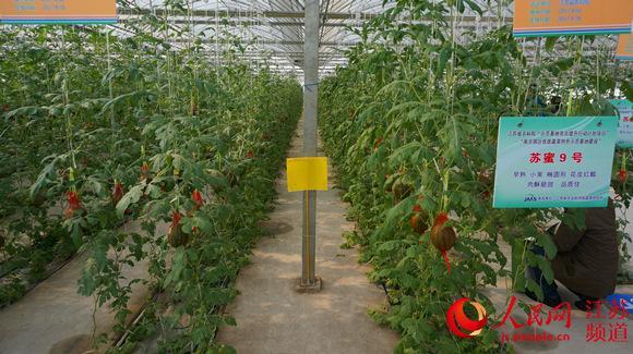 南京蔬菜种博会开幕 现场展示547个蔬菜新品种
