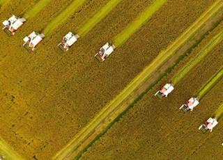 江苏兴化百万亩水稻开镰收割