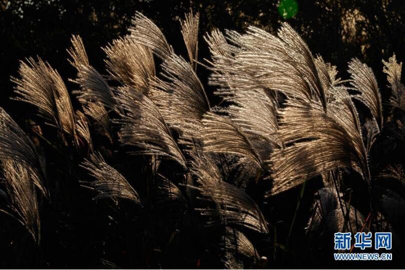 昆明淮安盱眙龙泉清水:蒹葭苍苍别墅湖畔江苏二手佳湖图片