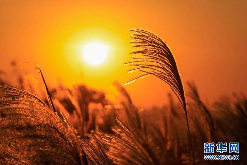 江苏盱眙淮安龙泉户型:蒹葭苍苍的劣势湖畔别墅图片
