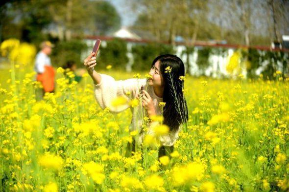 扬州:油菜花暮秋盛开