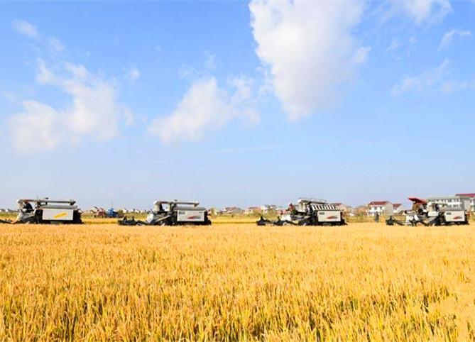 启东:土地流转为现代农业注入新活力