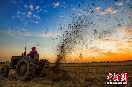 无锡2000多亩优质水稻秋收 风吹稻谷香