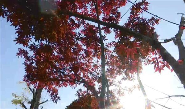一年好景君须记 最是橙黄橘绿时——南京最美秋色在等你