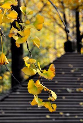 南京最美秋色在等你