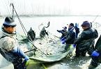鱼跃人欢迎丰收