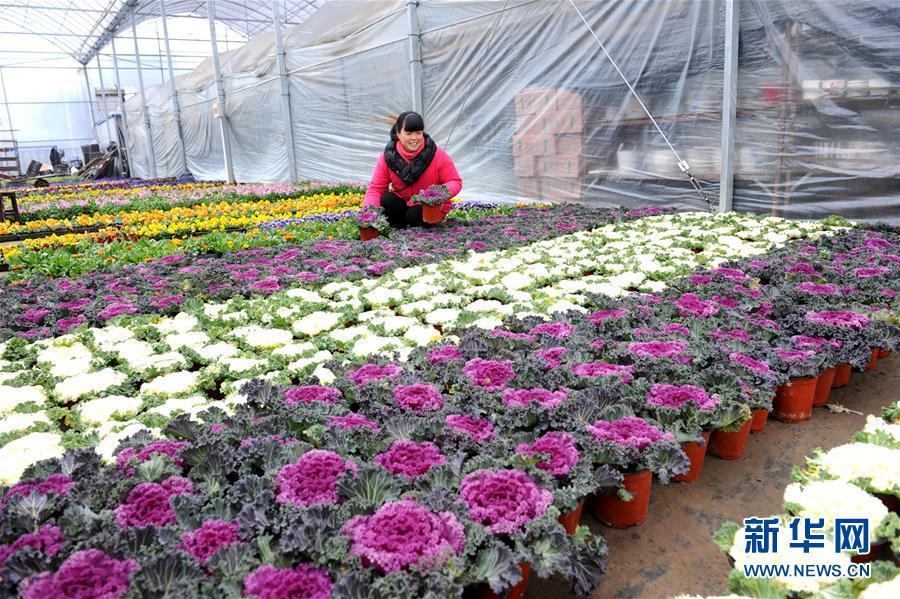 江苏如皋:花卉产业助农增收