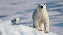 中国的北极政策:认识北极 守护北极