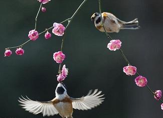 """小鸟""""亲吻""""花蕊 感受春的芬芳"""