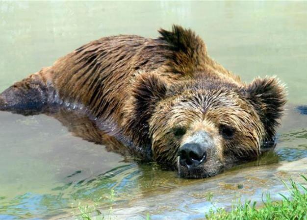 江苏苏州:动物享清凉