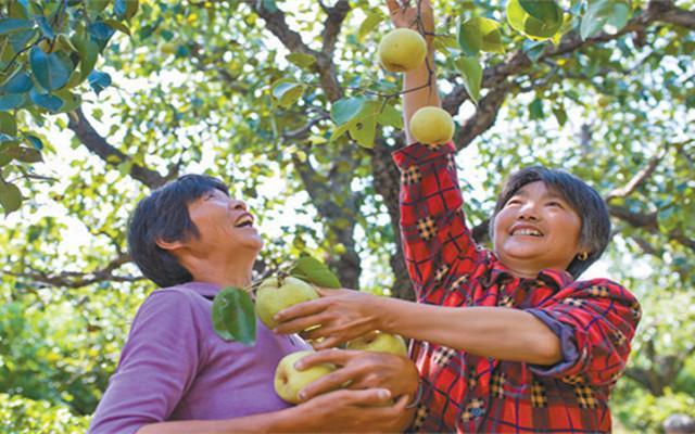 宿迁推动农业特色种植 发展高效生态农业