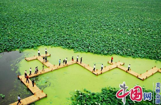 美丽金湖故事之三:半城绿色半城水 荷都美景入画来
