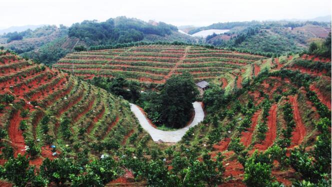安远新龙乡推动产业集中化、规模化激发贫困户内生发展动力