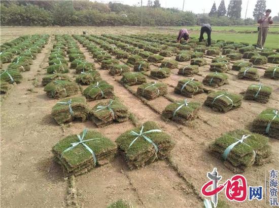 镇江荣炳退役甲士马涛指点村平易近种草坪创富