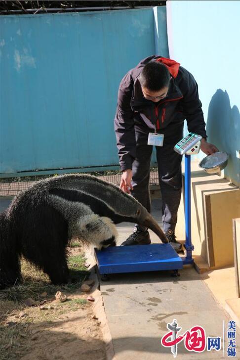 """无锡动物园为其居民发""""身份证""""――秋季动物大体检"""