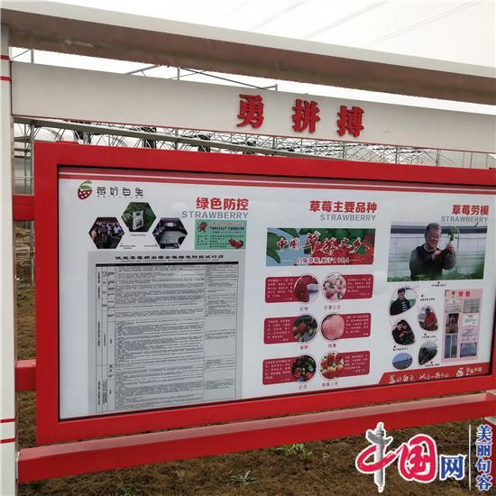镇江草莓协会种植种植大户:与草莓专家观摩当场共探品质加强