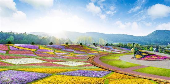 天辰注册地址@南京人 这里有打开常州秋冬季最美方式